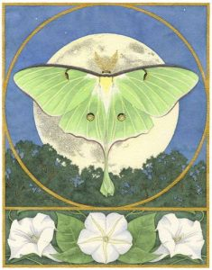 Luna Moth With Moonflowers – Ink and watercolor painting by Carrie Wild